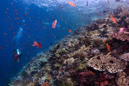 Komodo-Dive-Center-Batu-Bolong-4